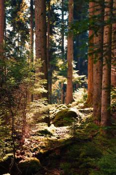Nature-llement belle(2)