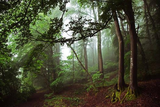 Dans les bois/into the forest