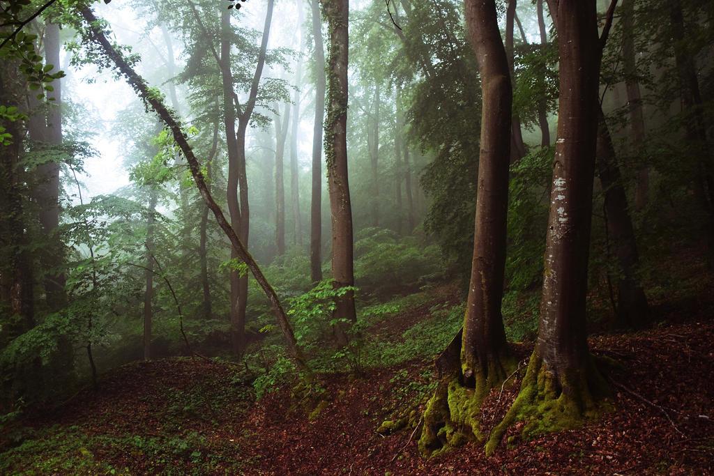 Trees memories