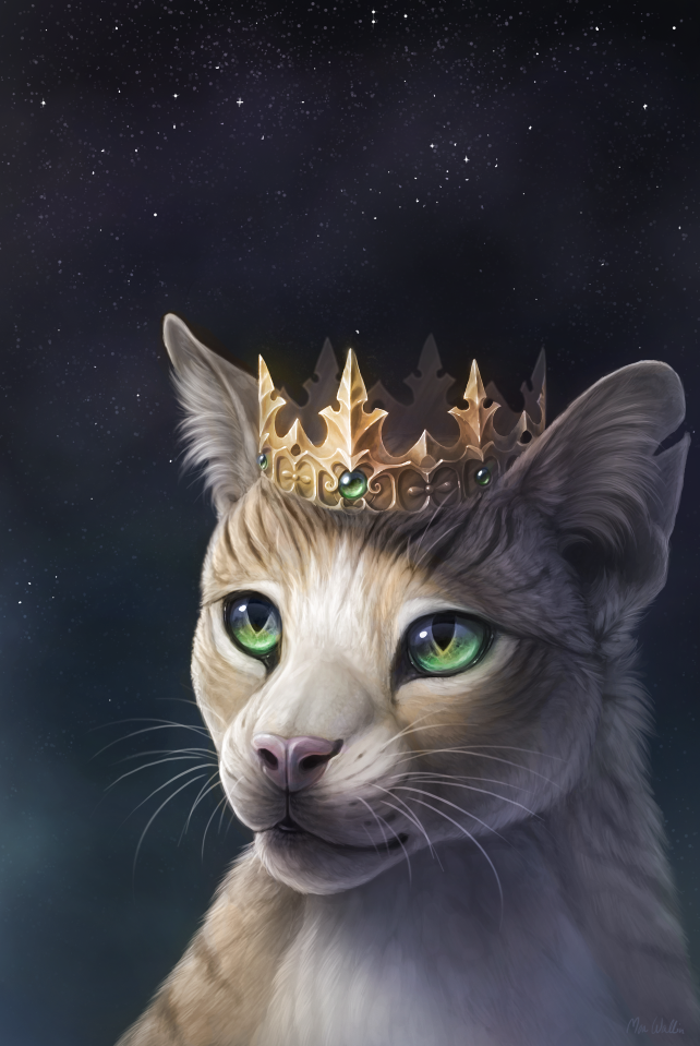 The king of the cats cover