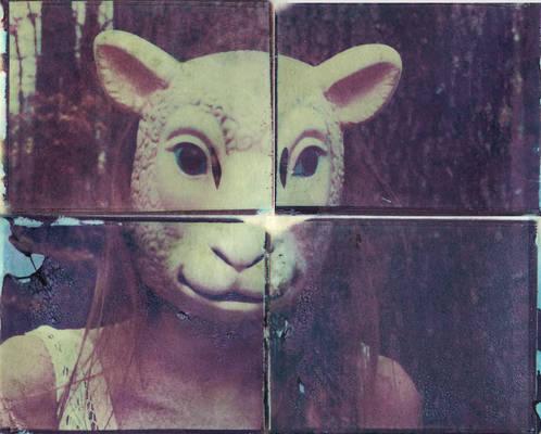 Image Transfer - Sheep Sister