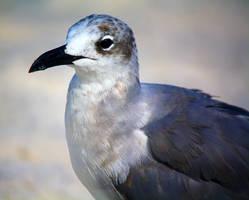 Seagulls  by flocksofseagulls