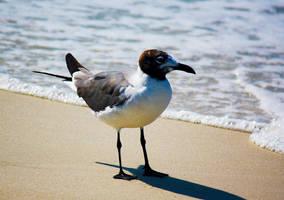 Seabird by flocksofseagulls