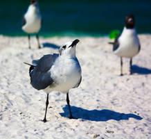 Such Fab by flocksofseagulls