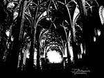 Through a Cathedral Darkly