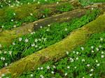 Mossflower Woods