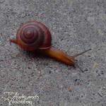 Friend Snail