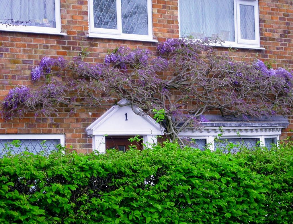 #1 Cottage by MrWootton