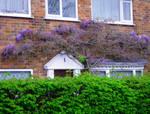 #1 Cottage
