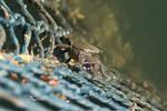 Crab by tawunap159