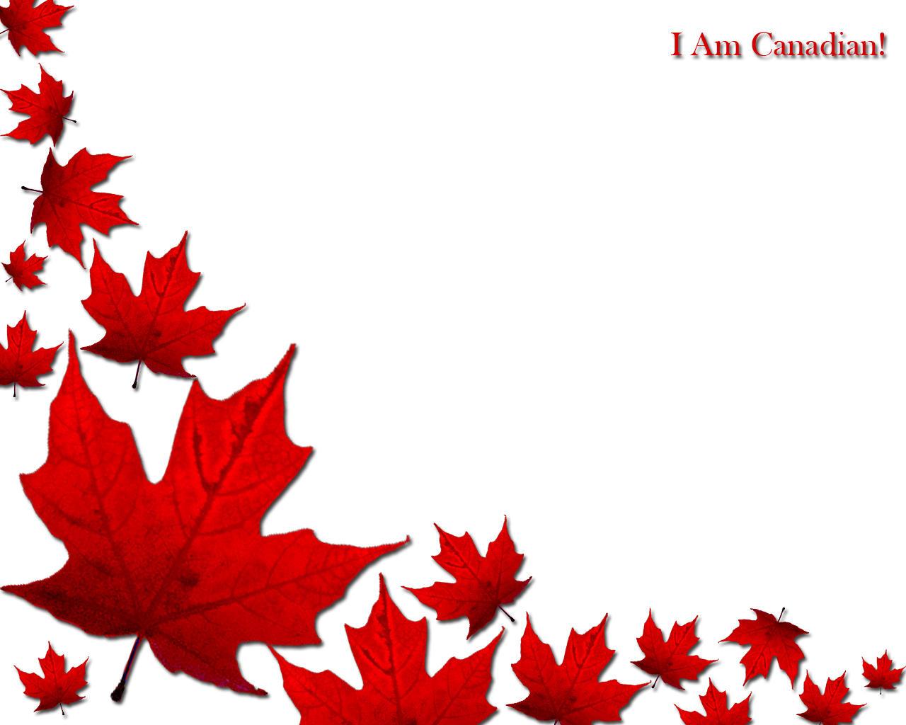 Disclaimer I am Canadian   I Am Canadian Wallpaper