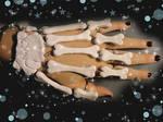 Skeleton Hand Ring-Bracelet