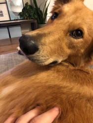 not now please