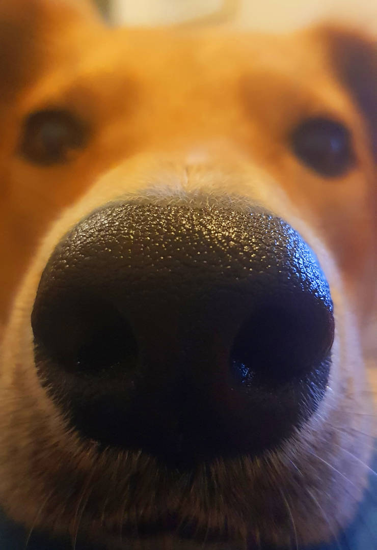 big nose luna