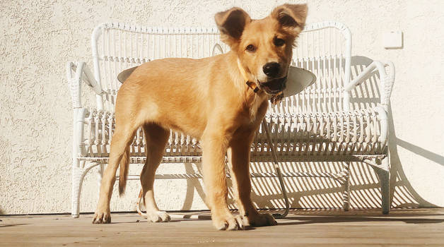 big ears luna