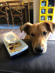 cookie luna