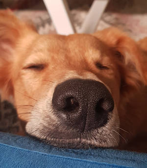 sleepy luna