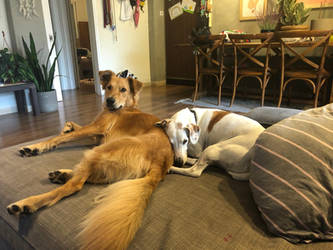 Luna with a new friend