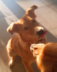 Twilight luna