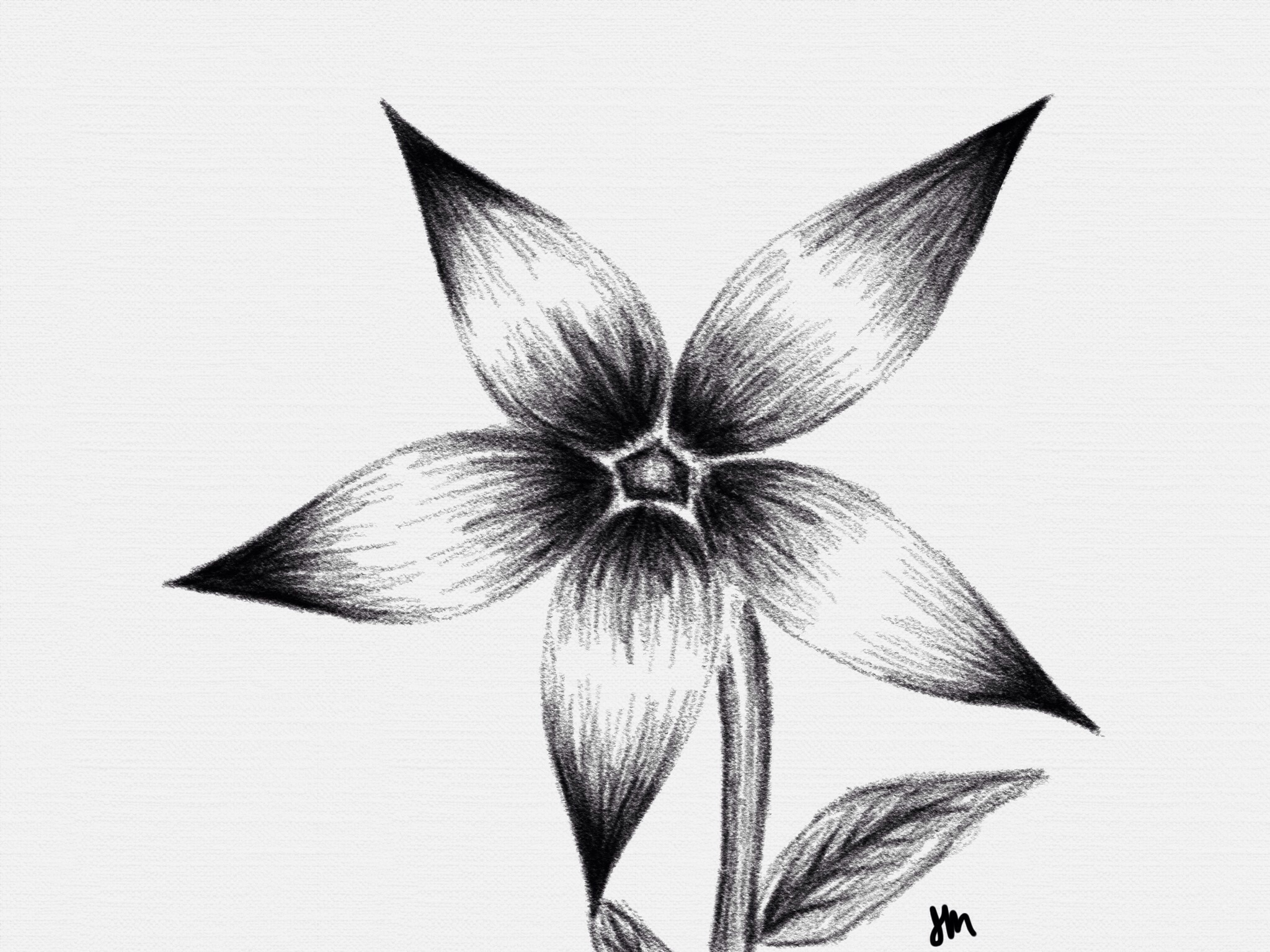 Shaded Flower Jpg 2048x1536 Shaded Flower Drawings