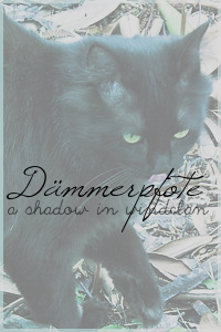 Daemmerpfote by nightsly