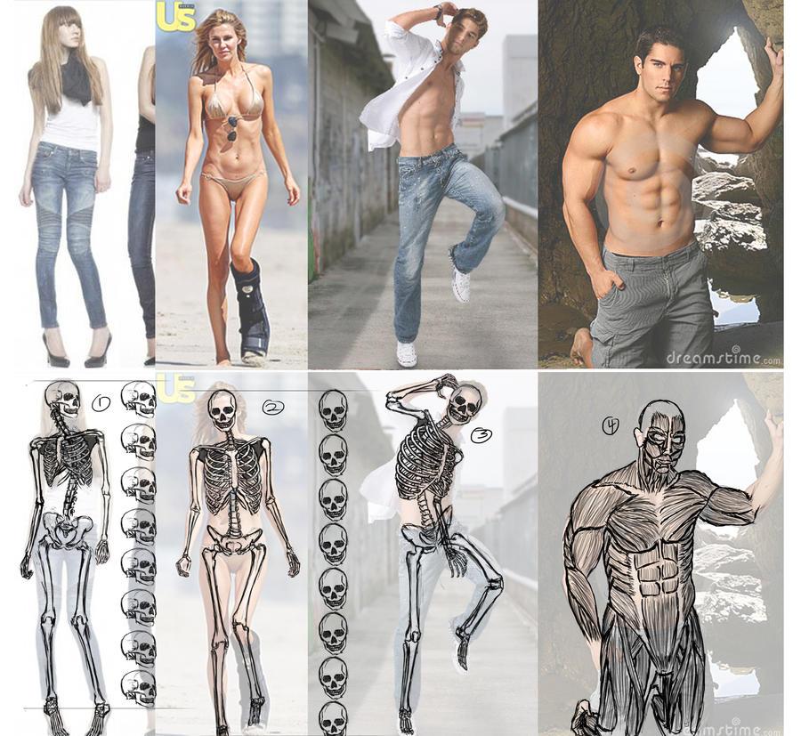 Human Anatomy Study By Qtroubadour On Deviantart