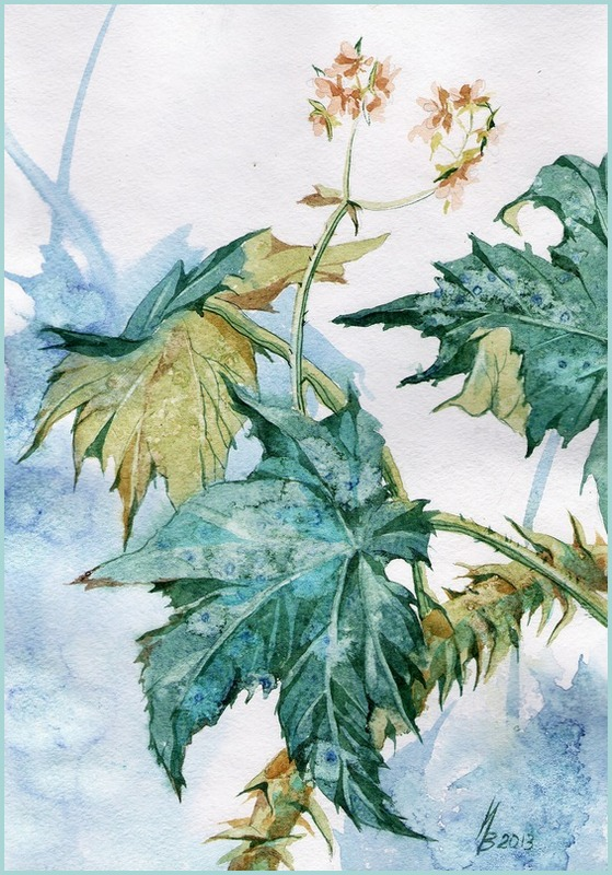 begonia by kosharik69
