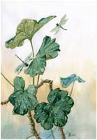 Pelargonium and dragonflies