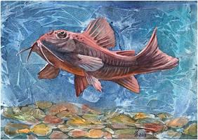 catfish by kosharik69