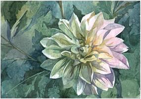 White dahlia by kosharik69