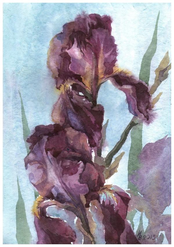 Iris by kosharik69
