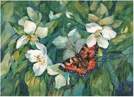 blooming jasmine by kosharik69