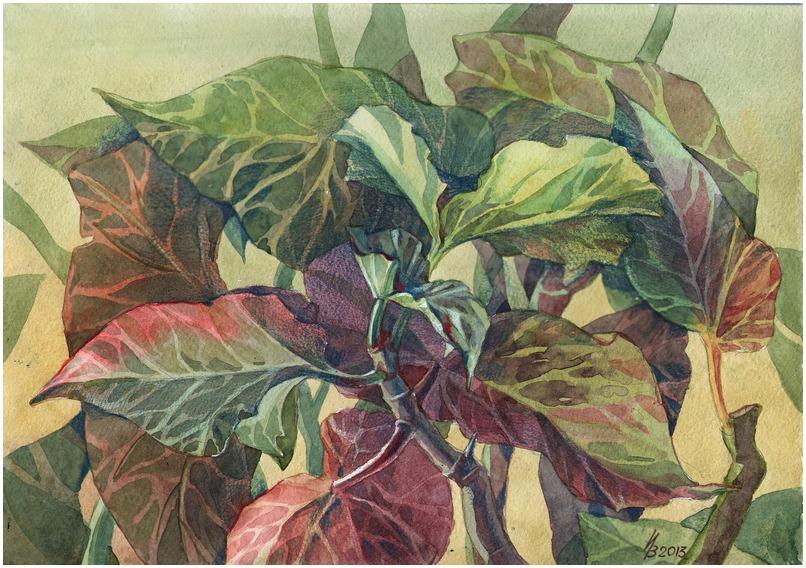 Begonia colors of the rainbow by kosharik69