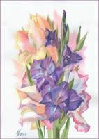 purple gladiolus by kosharik69