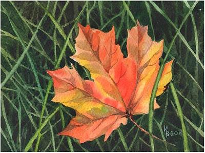 a maple leaf by kosharik69