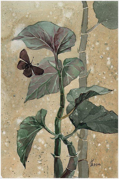 brown butterfly by kosharik69