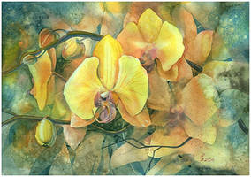 yellow orchid by kosharik69