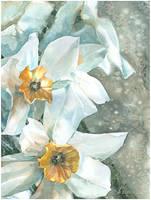 daffodils by kosharik69