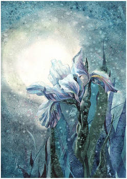 lunar iris