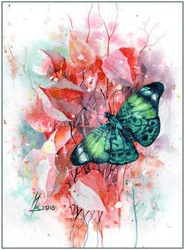 Emerald butterfly