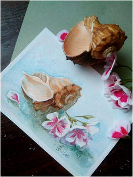 Shell and flowers Pelargonium
