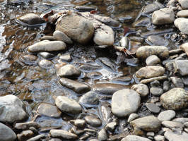 old stock - river rocks 005 by brookeasaurr