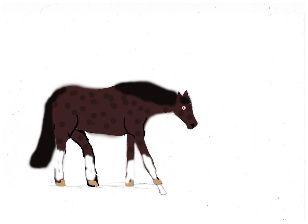Dark Bay Quarter Horses Marty Dark Bay Spotted Quarter Horse Stallion by Whenwolveshowl on