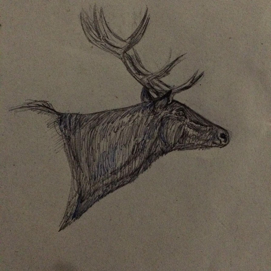 Quick red deer sketch  by whenwolveshowl