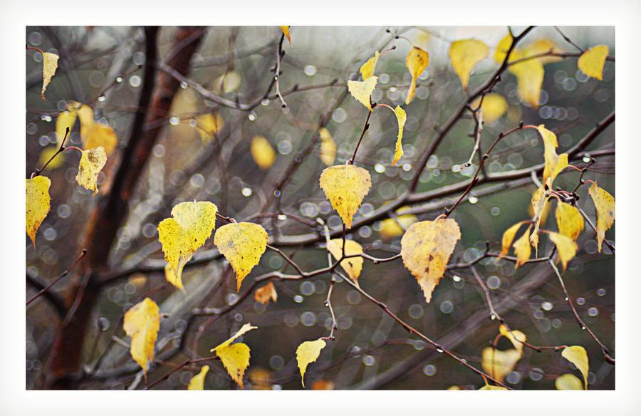 Wet Leaves by hakukamizaki
