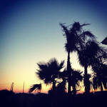 Palm Tree Sunset Photography