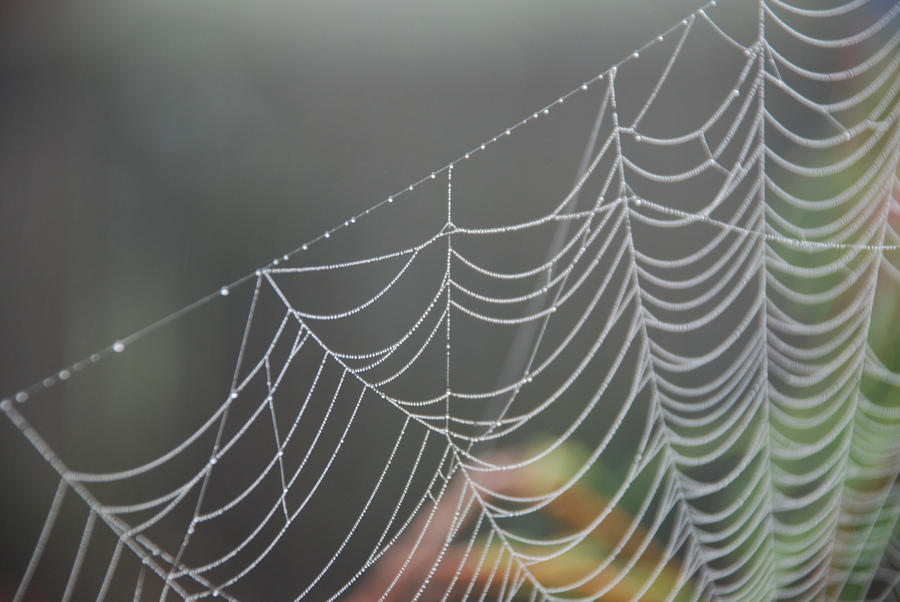 Morning dew on a web by Elderjarl