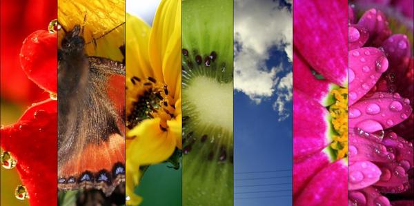 rainbow by JustaPanda