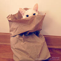 Don't let the cat outta the bag! by OdieFarber