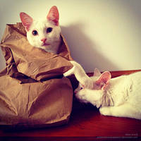 Cats and Bags by OdieFarber